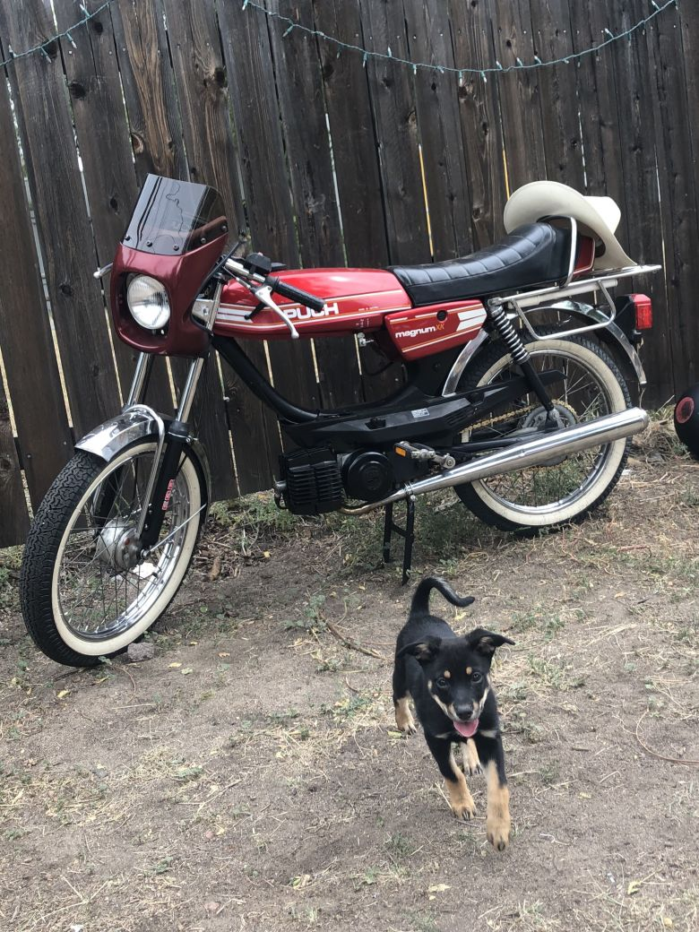 Moped photo for sheuxmlin